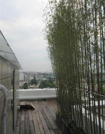 penthouse in gubei for rent floor heating with nice view, expat housing, apartment for rent in Shanghai (13)