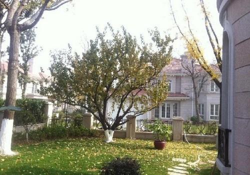 6-bedroom-villa-at-jiushi-western-suburban-garden-in-qingqu-in-shanghai-for-rent7