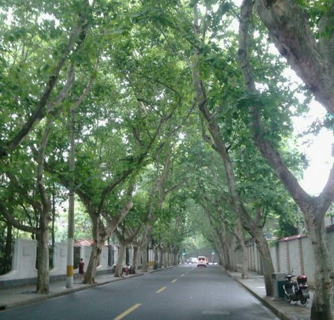 Kangping road terrace flat for rent 3